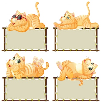 흰색 바탕에 귀여운 고양이와 보드 템플릿