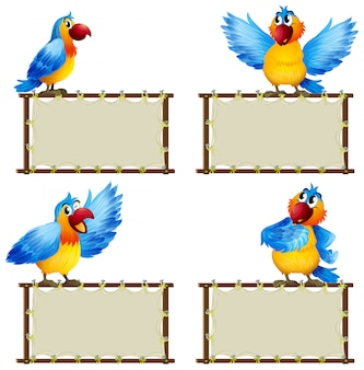 Board template with cute parrot on white background