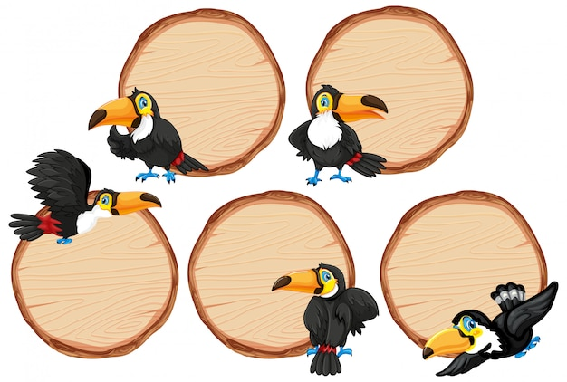 Board template with cute toucan on white background