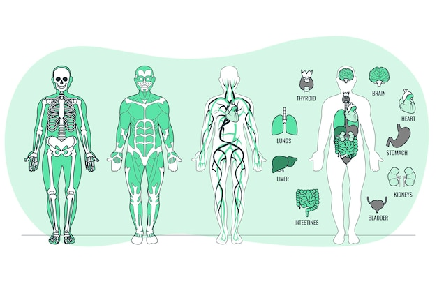 Body anatomy concept illustration