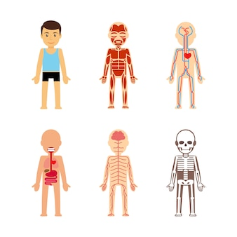 Body anatomy vector illustration