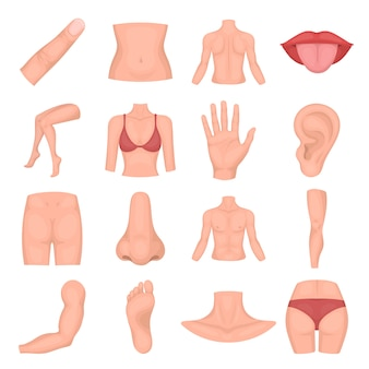 Body human cartoon vector icon set. vector illustration of anatomy body human.