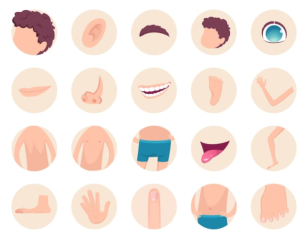 Body parts. human anatomy head legs fingers nose hands back belly  fragments collection. back and head human, foot and hand illustration