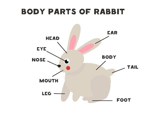 귀여운 만화 토끼의 신체 부위. 아이들을위한 영어로 동물 해부학. 단어 학습.