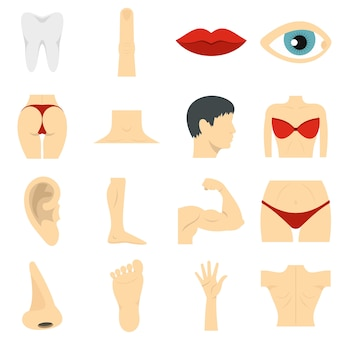 Body parts set flat icons