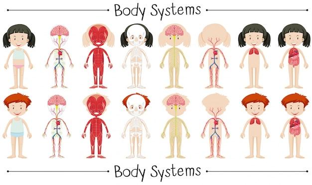 少年少女の体系図