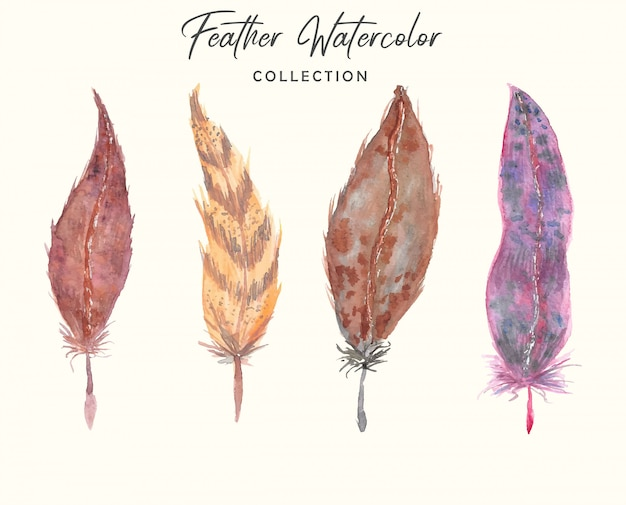 Boho beautiful feather watercolor collection