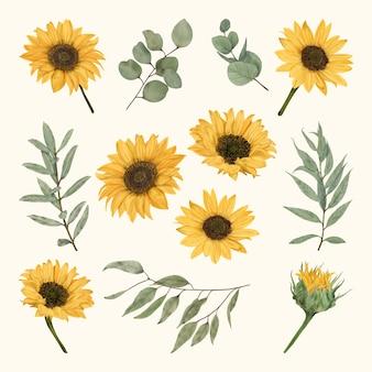 Boho sunflowers with eucalyptus leaves