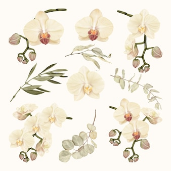 Boho white orchids with eucalyptus leaves