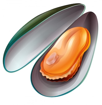 Bolied mussel on white