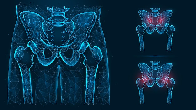 Bones of the pelvis and hip, human anatomy. pelvic and hip joint pain.