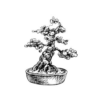 鉢植えの盆栽。ベクトルヴィンテージハッチングイラスト。白で隔離