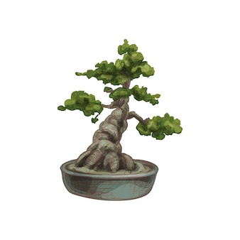Bonsai tree in pot vector vintage hatching color illustration isolated on white