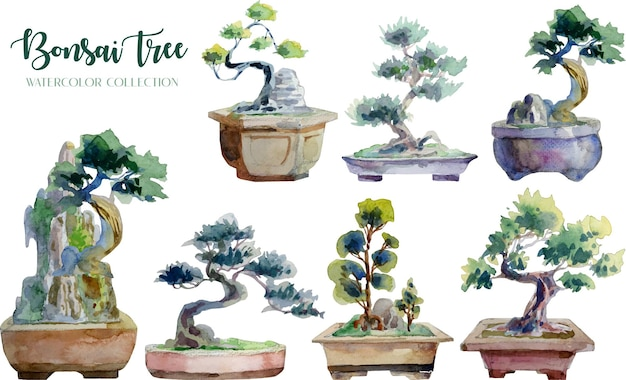Bonsai tree and pot watercolor painting collection.