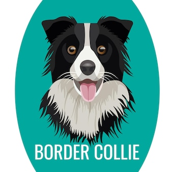 ベクトルイラストの下に純血種の名前で青に分離されたボーダーコリーのペットの肖像画。大きな飼い犬、好きなペットの友達