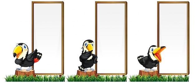 Modello di bordo con uccelli tucano