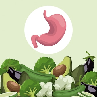 Border vegetables healthy food to stomach organ