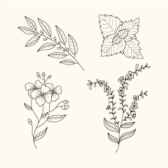 Botanic herbs and flowers vintage style