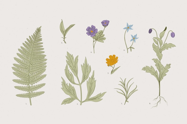 Erbe botaniche e fiori selvatici in stile retrò