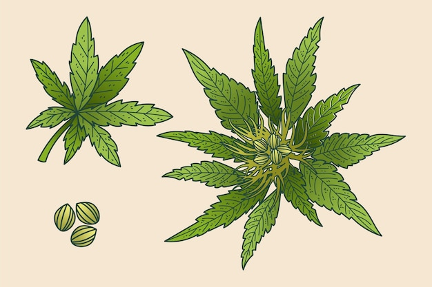 Botanical cannabis leaves background