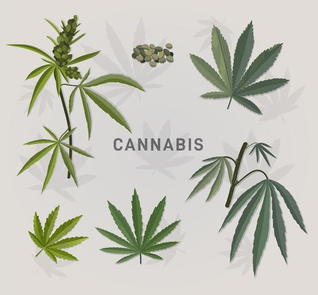 植物の大麻の葉セット