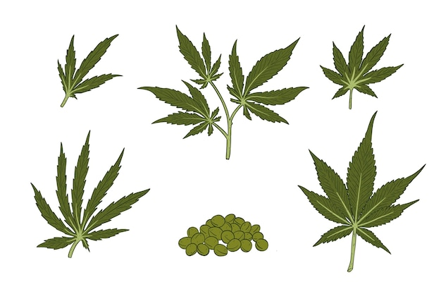 Набор листьев ботанического каннабиса