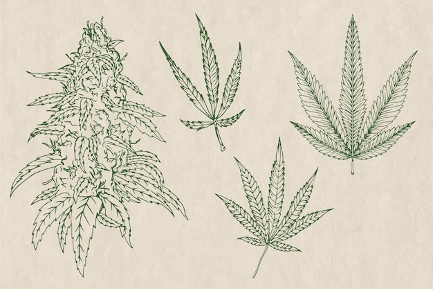 Botanical cannabis leaves