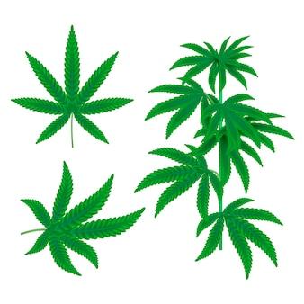 Foglie di cannabis botanica