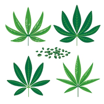 Botanical cannabis leaves
