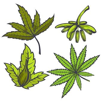Ботанические листья каннабиса