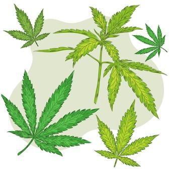植物性大麻の葉
