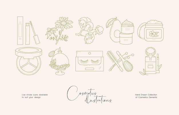 Botanical cosmetics line art illustration set for brand identity