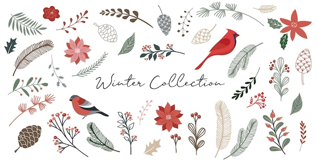 Botanical elements, winter flowers, leaves, birds and pinecones isolated, hand drawn vector illustration