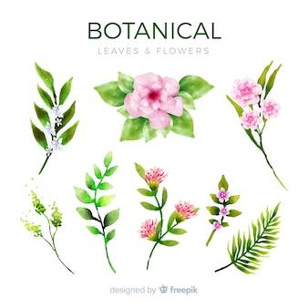 식물 꽃과 나뭇잎 컬렉션