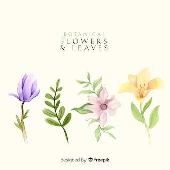 Ботаническая коллекция цветов и листьев