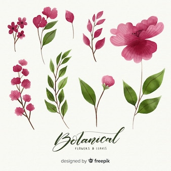 Botanical flower and leaves collection