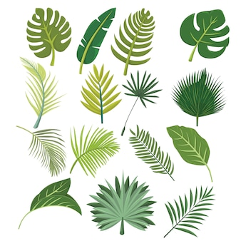 Botanical fresh leaves in tropical design set