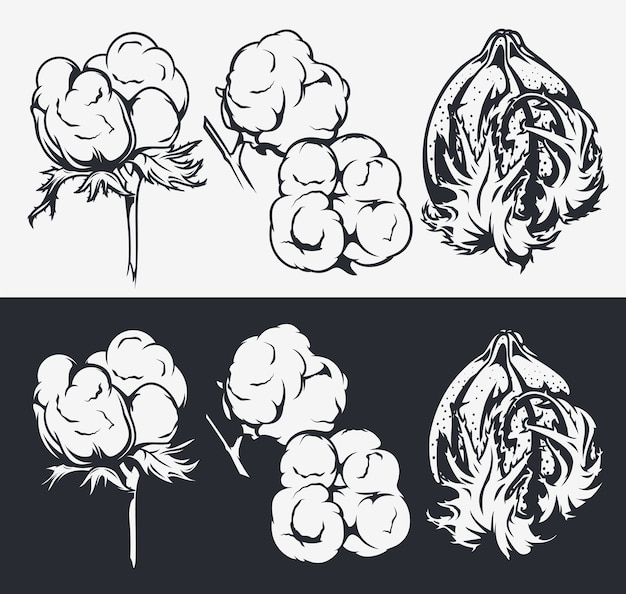 植物画セット。綿の花。デザイン、装飾のための要素。