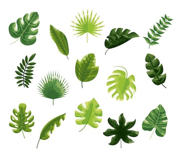 Ботанические листья набор