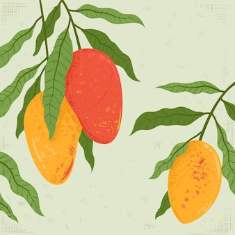 Botanical mango tree fruits illustration