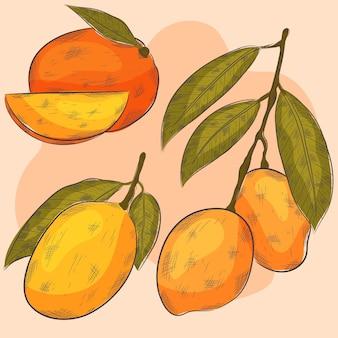 Botanical mango tree illustration