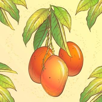 Ботаническая иллюстрация дерева манго