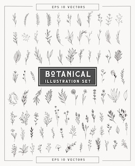Botanical minimal plants and flowers set . simple illustrations hand drawn in line art style. isolated elements for graphic design, transparent clip art for your creativity.