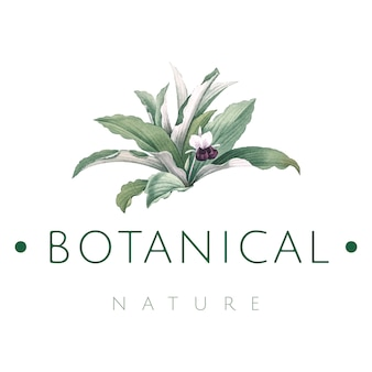 Botanical nature logo design vector