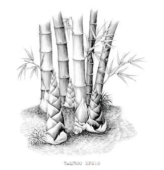 たけのこの手描きのビンテージスタイルの黒と白の植物。