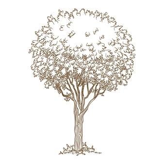植物の古い木のアイコン。手描きとwebデザインの植物の古い木のベクトルアイコンの概要図