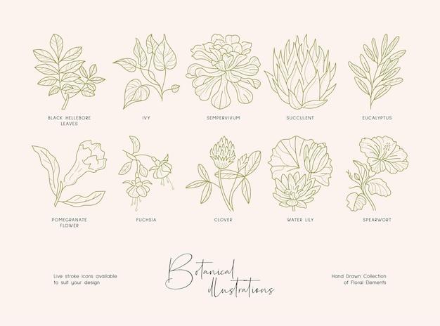 Botanical premade line art logotype template minimal and modern branding identity