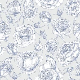 Ботанический фон с цветущими английскими розами, рисованной с контурной линией на белом.