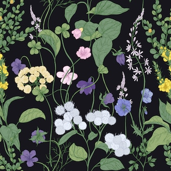 Botanical seamless pattern with blooming wild flowers and meadow flowering plants on black background.