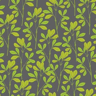 フェヌグリークの植物のシームレスパターン茎と灰色の葉